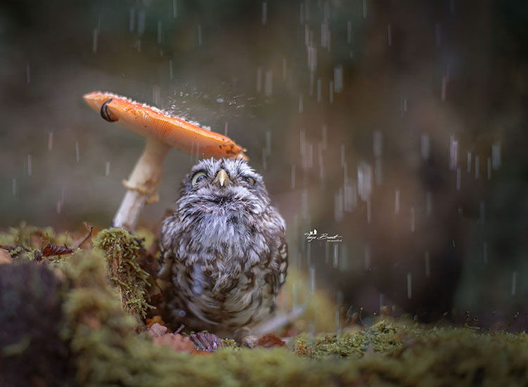 Un paraguas muy otoñal.