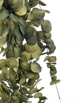 Eucalipto foam 10x10x120 cm.
