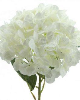 Vara hortensia gigante 90×30 cm